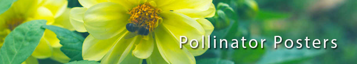 Pollinator Posters