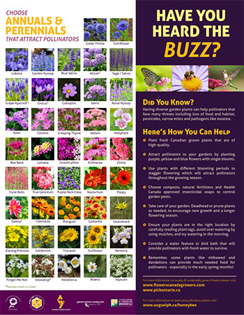 pollinator-posters